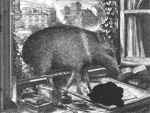 Image by Claude Roy; depicts a peccary entering a window and stepping onto a writer's desk.